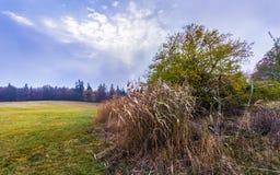 Baum und trockenes Gras in der Weide Stockfoto