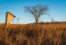 Baum und Vogelhaus Lizenzfreie Stockfotografie