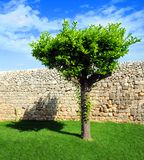 Baum und Wand lizenzfreie stockfotos