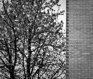 Baum und Wand Stockfotos