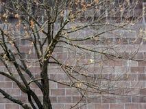 Baum- und Wandmuster Stockbild