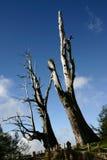 Baum und Wolken Lizenzfreie Stockfotografie
