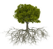 Baum und Wurzel Stockfotografie