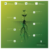 Baum und Wurzel Infographic-Design-Schablone Stockfotografie