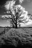Baum und Zaun Stockfoto
