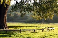 Baum und Zaun stockfotografie
