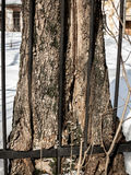Baum und Zaun Stockfotos