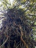 Baum und Zweige stockbilder