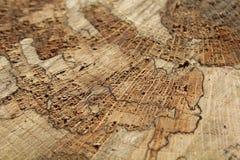 Baum unten cuted Lizenzfreie Stockfotografie