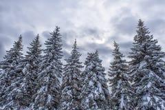 Baum unter dem Schnee Stockbilder