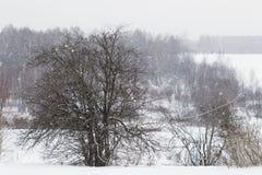 Baum unter den fallenden Schneeflocken im Winter Lizenzfreie Stockfotos
