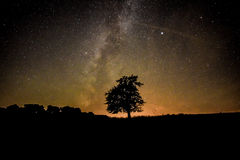 Baum unter Sternen Stockbilder