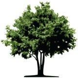 Baum (Vektor) Lizenzfreie Stockfotos