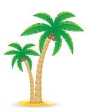 Baum-Vektorillustration der Palme tropische lizenzfreie abbildung