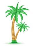 Baum-Vektorillustration der Palme tropische vektor abbildung