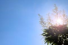 Baum verlässt gegen den blauen Himmel und das Sonnenlicht Stockfotografie