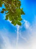 Baum verlässt grüner Farbe sonnigen Tag im Freien und Himmel Stockbilder