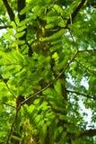 Baum verlässt Sonderkommando stockfotografie