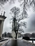Baum Vilnius-zentralen Platzes stockfotografie