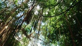 Baum von Asien Stockbilder
