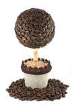Baum von den Kaffeebohnen Stockfotos