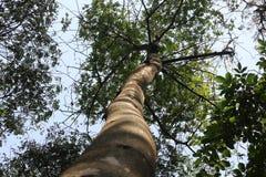 Baum von der Ansicht von unten Stockbilder