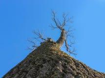 Baum von der Unterseite Stockbild