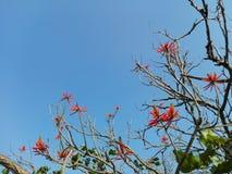 Baum von getrockneten Niederlassungen mit roten Blumen stockbilder
