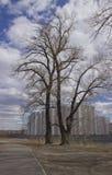 Baum von hohen Geb?uden stockfotos