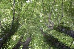 Baum von unterhalb Lizenzfreie Stockfotografie