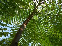 Baum von unterhalb Stockbild
