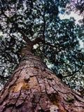 Baum von Unterseite zu Spitze lizenzfreies stockbild