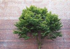 Baum vor Backsteinmauer Stockfotos