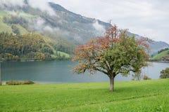 Baum vor dem See mit den Grünen und Rotblättern Lizenzfreie Stockfotos