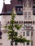 Baum vor historischem Gebäude in Ottawa, Kanada Lizenzfreies Stockfoto