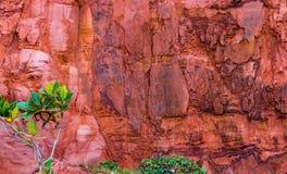 Baum vor roter Felsenklippe Lizenzfreie Stockbilder