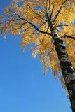 Baum während des Falles Stockfotografie