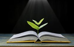 Baum wachsen vom Buch mit dem hellen Glänzen als Erhalten des Wissens auf schwarzem Hintergrund, Konzept heran, da öffnendes Papi Stockbild
