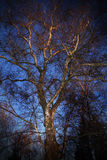 Baum am Westsonnenschein Lizenzfreies Stockfoto