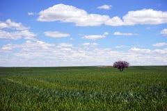 Baum-Wiese Stockfotos