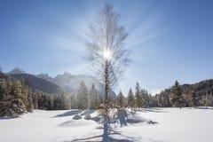 Baum am Winter mit Eis, Schnee und Sonne Stockbilder