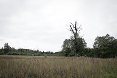 Baum wird durch Blitz geschlagen Stockfotos