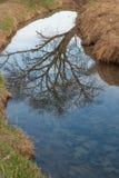 Baum wird im Wasser reflektiert Lizenzfreie Stockfotografie