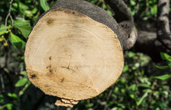 Baum wurde geschnitten Stockfotografie