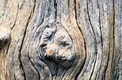 Baum-Wurzel Lizenzfreies Stockbild