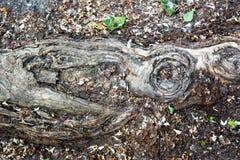 Baum-Wurzel auf dem alten Hintergrund Lizenzfreies Stockbild