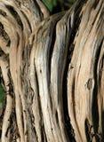 Baum-Wurzeln lizenzfreies stockbild