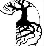 Baum-Wurzeln Stockfoto