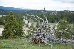Baum-Wurzeln des Todes Stockfotografie