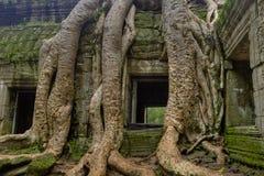 Baum-Wurzeln um Fenster Lizenzfreie Stockfotografie